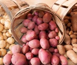 Especulación con las patatas en España