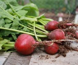 Alimentos ecológicos más saludables