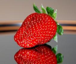 Procedimientos para la trazabilidad alimentaria