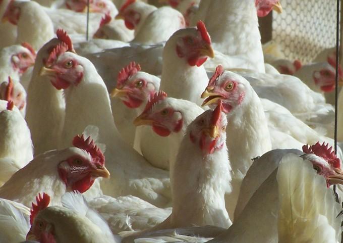 Resistencia de las bacterias a los antibióticos
