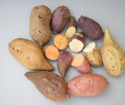 Batata modificada genéticamente de forma natural