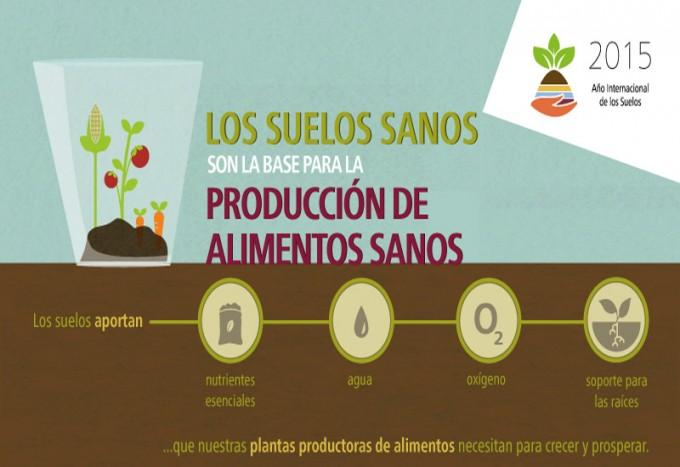 Infograf a los suelos sanos son la base para la for Importancia de los suelos