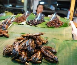Seguridad alimentaria de los insectos