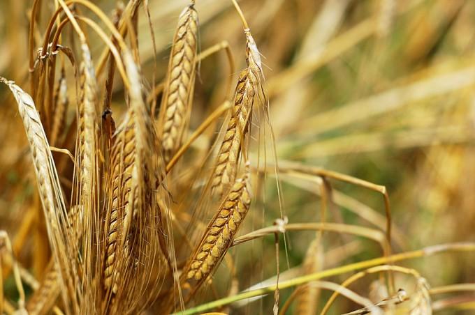 Seguridad alimentaria y cambio climático