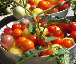 Alimentos respetuosos con el medio ambiente