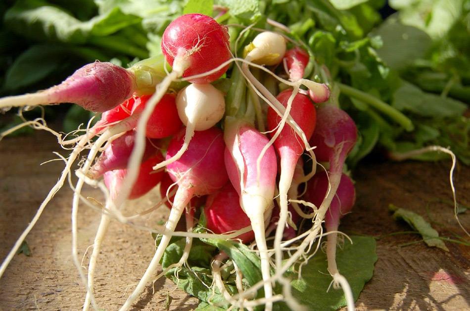 Rentabilidad_agricultura_ecologica