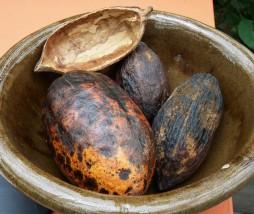 Investigación del sabor del cacao
