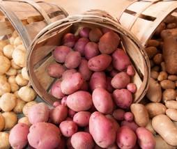 Patatas viejas francesas