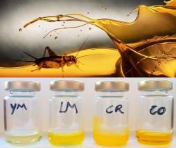 Perfil lipídico del aceite de insecto