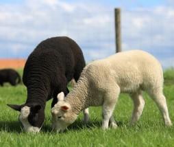 Prohíbir la clonación animal en Europa