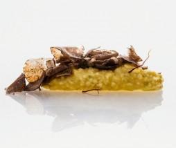 'Risotto' a la milanesa (de coliflor)