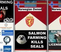 salmón escocés boicot
