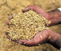 Desastres naturales y producción alimentaria