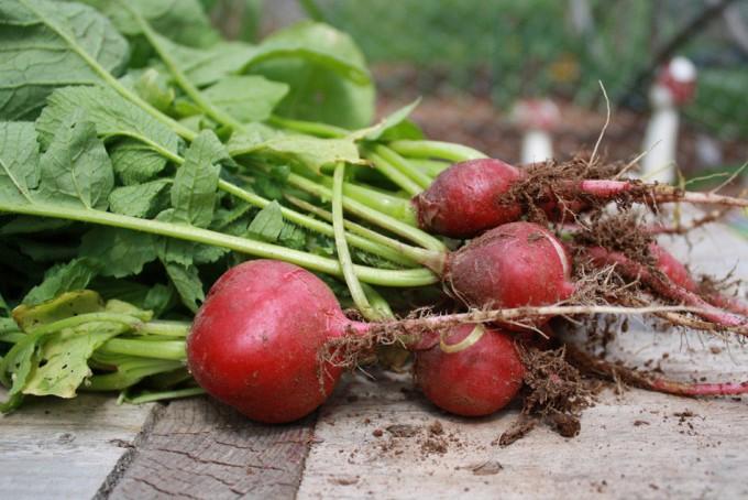 Estudio sobre el rendimiento de la agricultura ecológica