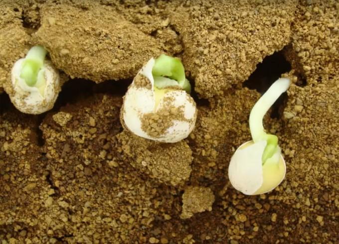 Investigación sobre el cultibo de alimentos en el planeta Marte