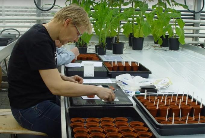 Proyecto para investigar la absorción de metales pesados en los alimentos