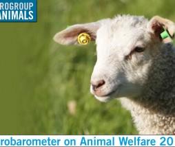 Políticas de bienestar animal