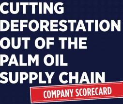 Deforestación por el aceite de palma