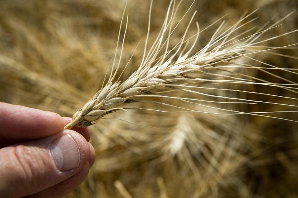 La calidad nutricional de los alimentos se reduce con el cambio climático