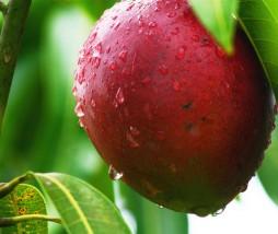 nariz electrónica del mango