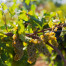 Vinos ecológicos y vinos biodinámicos