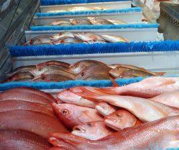 Etiquetado incorrecto en el pescado