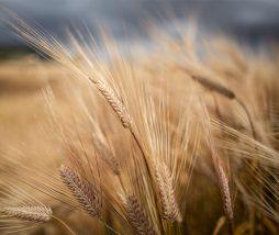 Relación entre el pan y los gases de efecto invernadero