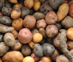 Cultivo de patatas en Marte
