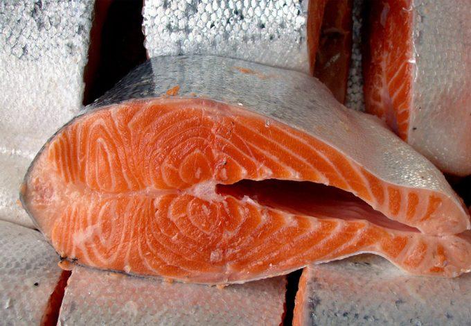 Problemas con los salmones de piscifactoría