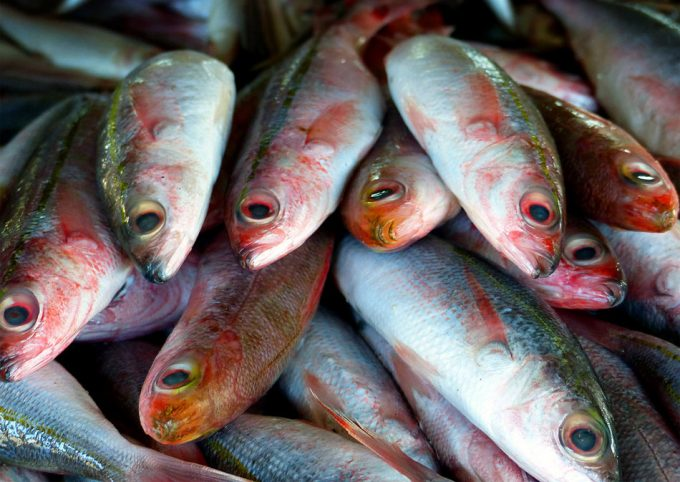 Pesca intensiva en el Mar Mediterráneo
