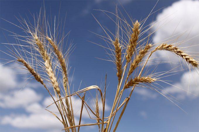 Seguridad alimentaria y globalización