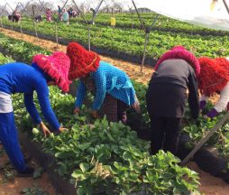 Business Actions Against Forced Labour