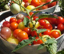 Mercado de los alimentos ecológicos
