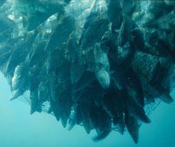 Sobrepesca en el Mar Mediterráneo