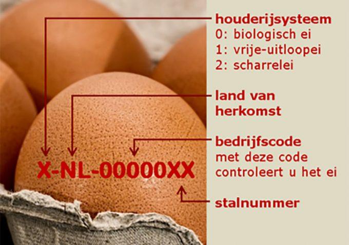 Contaminación de los huevos por fipronil
