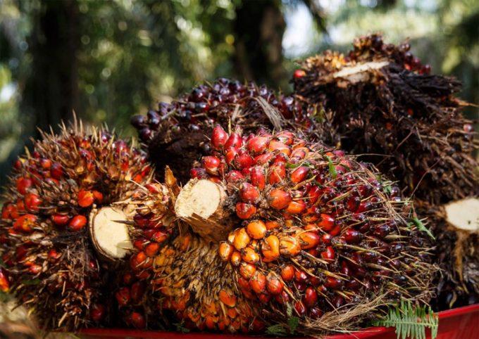 Sello libre de aceite de palma