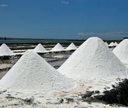 Contaminación de la sal por hongos