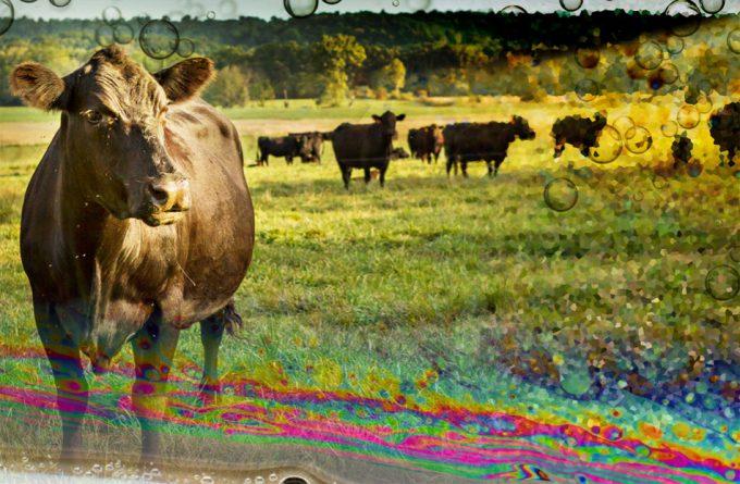 Metano generado por el ganado