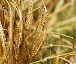 Mejorar la producción alimentaria en el mundo