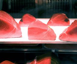 Atún rojo de laboratorio