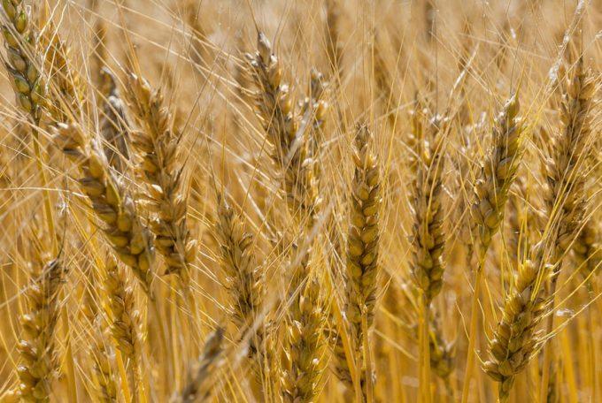 Nuevas investigaciones sobre la producción de alimentos