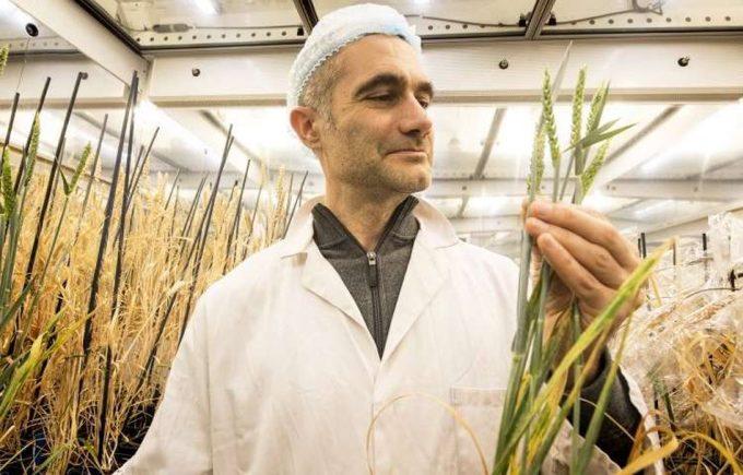 Investigación para el desarrollo de cultivos