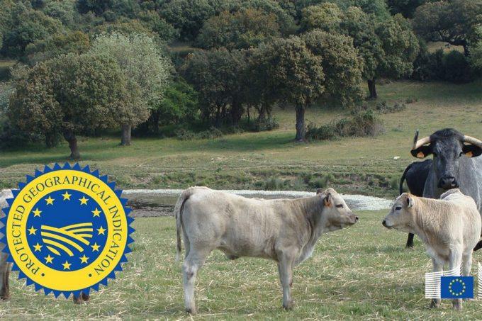 Carne de Salamanca