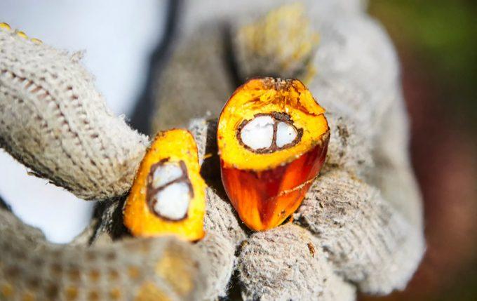 Transparencia en el suministro de aceite de palma