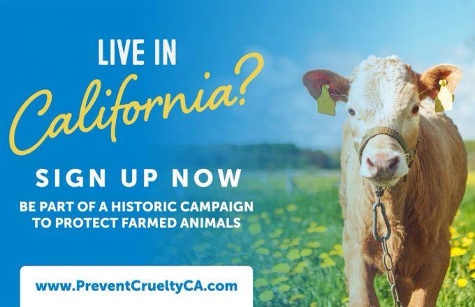 En California se podría instaurar la ley de bienestar animal más progresista del mundo