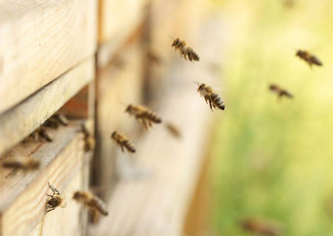 insecticidas perjudiciales para las abejas