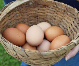 Caracter saludable de los huevos