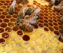Miel de importación