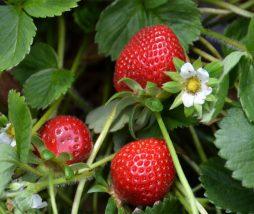 Reglamento de los alimentos ecológicos