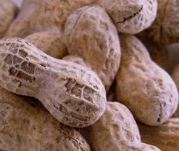 Alérgenos de los cacahuetes